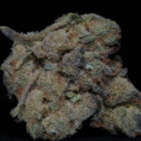 Girl Scout Cookies Feminised Cannabis Seeds   Big Head Seeds