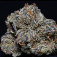 Grandaddy Purple Feminised Cannabis Seeds   Big Head Seeds