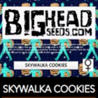 Skywalka Cookies Feminised Cannabis Seeds   Big Head Seeds