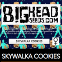 Skywalka Cookies Feminised Cannabis Seeds | Big Head Seeds