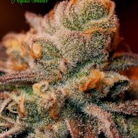 Blackberry Moonrocks Feminised Cannabis Seeds - Anesia Seeds