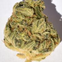 Bruce Banner #3 Feminised Cannabis Seeds | Big Head Seeds