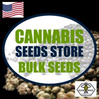 Chemdawg Feminised Cannabis Seeds | Good Buzz Genetics