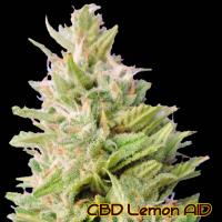 CBD Lemon AID Feminised Cannabis Seeds | The Original Sensible Seed Company