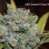 Sweet and Sour Widow Regular Cannabis Seeds