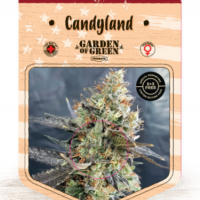 Candyland Feminised Cannabis Seeds | Garden of Green