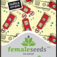 Chem OG Feminised Cannabis Seeds | Female Seeds