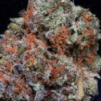 Don Girl Scout Cookies Feminised Cannabis Seeds   Don Avalanche Seeds