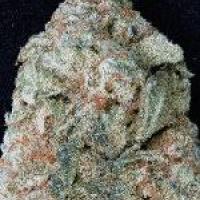 Don OG Kush Feminised Cannabis Seeds | Don Avalanche Seeds
