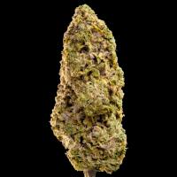 Fast Master Feminised Cannabis Seeds - Megabuds