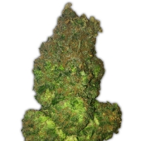 Fruit Punch Auto Feminised Cannabis Seeds | Heavyweight Seeds