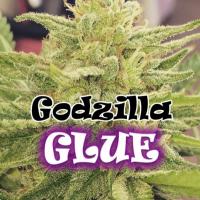 Godzilla Glue Feminised Cannabis Seeds | Dr Underground