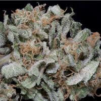 Gorilla Cookies Feminised Cannabis Seeds | Big Head Seeds