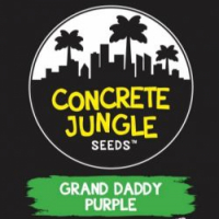 Grand Daddy Purple Feminised Cannabis Seeds - Concrete Jungle Seeds