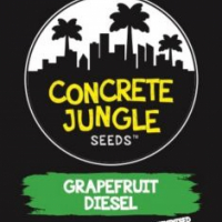 Grapefruit Diesel Feminised Cannabis Seeds   Concrete Jungle Seeds