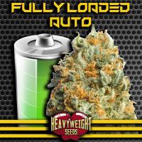 Fully Loaded Auto Feminised Cannabis Seeds | Heavyweight Seeds