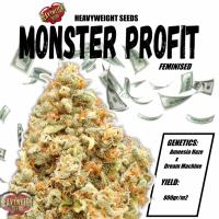 Monster Profit Feminised Cannabis Seeds | Heavyweight Seeds
