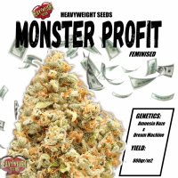 Monster Profit Feminised Cannabis Seeds   Heavyweight Seeds
