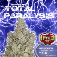 Total Paralysis Feminised Cannabis Seeds | Heavyweight Seeds