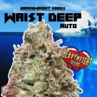 Waist Deep Auto Feminised Cannabis Seeds   Heavyweight Seeds