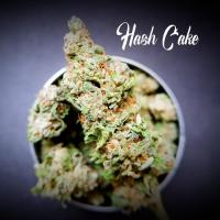 Hash Cake Feminised - Tastebudz