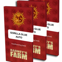 Gorilla Glue Auto Feminised Cannabis Seeds | Barney's Farm