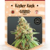 Kosher Kush Feminised Cannabis Seeds | Garden of Green