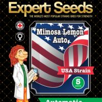 Mimosa Lemon Auto Feminised Cannabis Seeds | Expert Seeds