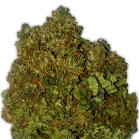 Money Bush Feminised Cannabis Seeds | Heavyweight Seeds