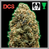 Monster Bruce Banner Feminised Cannabis Seeds | Monster Genetics