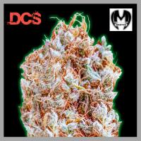 Monster Zkittlez Feminised Cannabis Seeds | Monster Genetics