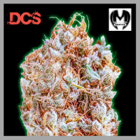 Monster Zkittlez Feminised Cannabis Seeds | Monster Genetics