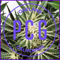 AJ's Sour x Key Lime Pie Feminised Cannabis Seeds - Purple City Genetics