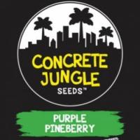 Purple Pineberry  Feminised Cannabis Seeds | Concrete Jungle Seeds