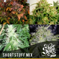 Short Stuff Mix (20 Seeds) Regular Cannabis Seeds   Shortstuff Seeds