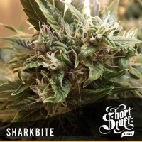 Sharkbite Feminised Cannabis Seeds | Shortstuff Seeds