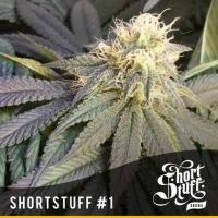 Short Stuff #1 Regular Cannabis Seeds   Shortstuff Seeds