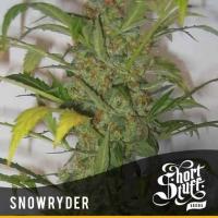 Snowryder Regular Cannabis Seeds | Shortstuff Seeds