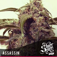 Auto Assassin Feminised Cannabis Seeds | Shortstuff Seeds