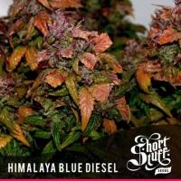 Himalayan Blue Diesel Feminised Cannabis Seeds | Shortstuff Seeds