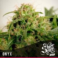 Onyx Feminised Cannabis Seeds   Shortstuff Seeds