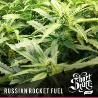 Russian Rocket Fuel Regular Cannabis Seeds | Shortstuff Seeds