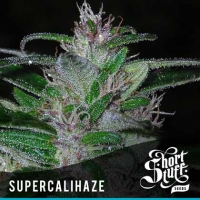 Super Cali Haze Feminised Cannabis Seeds | Shortstuff Seeds