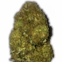 Skunky Monkey Auto Feminised Cannabis Seeds   Heavyweight Seeds