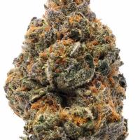 The New Feminised Cannabis Seeds | Humboldt Seed Organisation