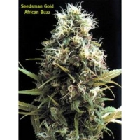 African Buzz Regular Cannabis Seeds | Seedsman