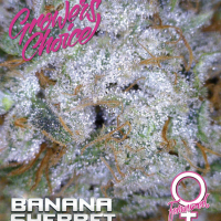 Banana Sherbet Feminised Cannabis Seeds - Growers Choice