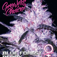 Blue Forest Berry Feminised Cannabis Seeds - Growers Choice