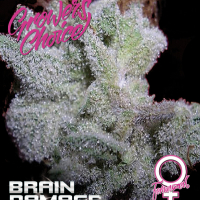 Brain Damage Feminised Cannabis Seeds - Growers Choice