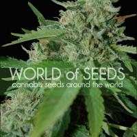 Brazil Amazonia Feminised Cannabis Seeds | World of Seeds